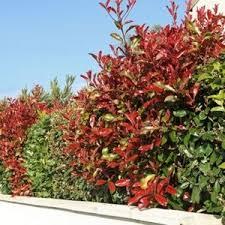 Quelle Plante Planter Pour Faire Un Brise Vue Une Maison à